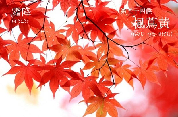 「楓蔦黄」の画像検索結果
